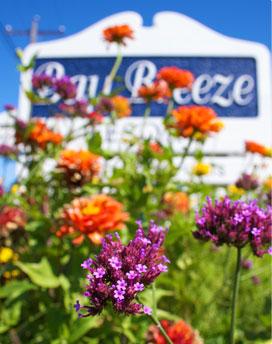 Flowers at Bay Breeze Resort