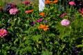 debbie-gardens